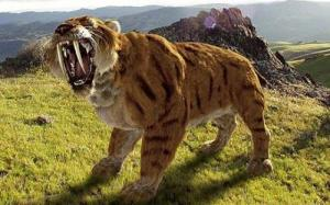 Saber-Tooth-Tiger