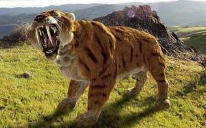 Saber-Tooth-Tiger