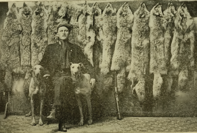 canadian-wolf-hunter-with-pelts