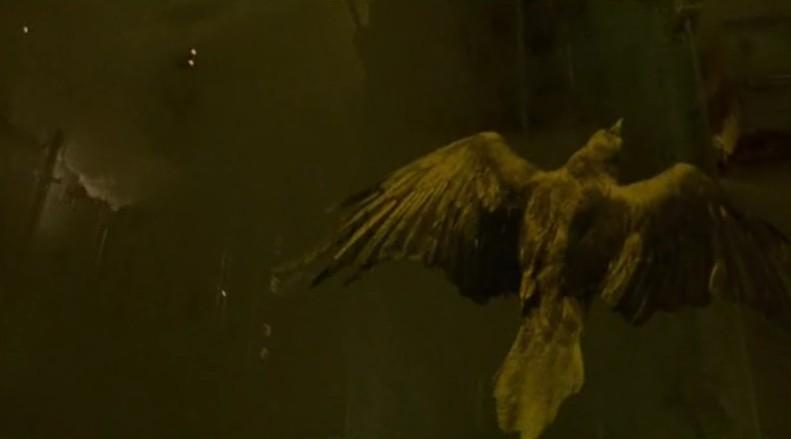 crow angel 1